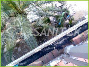 coloms-palomas
